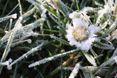 Margerite Frost