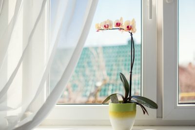 Orchidee Fenster