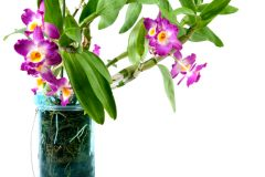 Orchideen in der Vase