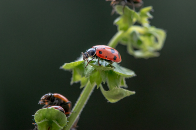rote-spinne